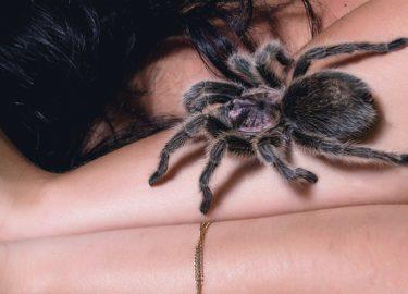 Kruipen spinnen echt in je mond als je slaapt?