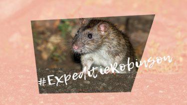 expeditie robinson 2018 ratten