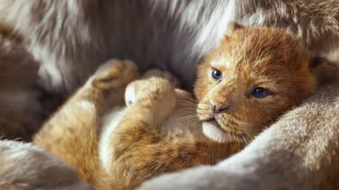 the lion king Disney trailer