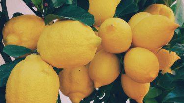 helpt water met citroen bij afvallen