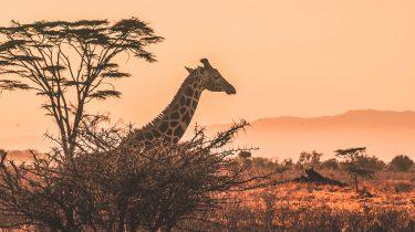 redenen malawi