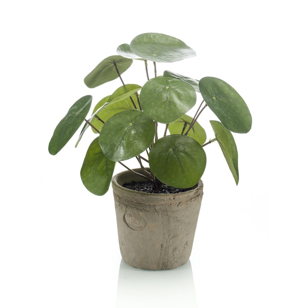 philea bush