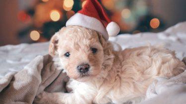 7 signalen dat je toe bent aan een hond in je leven in plaats van een vriend(in)