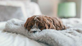 honden fotografie iphone 11 pro max