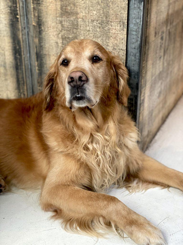 iphone 11 pro max huisdieren foto's maken