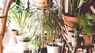 planten die niet doodgaan